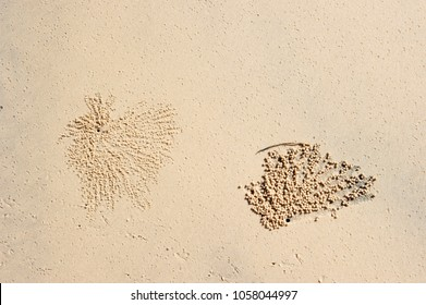 Sand worm pattern on a sand beach in Queensland (Australia)