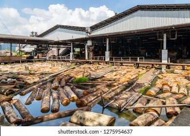 Sandakan, Sabah, Malaysia - March 28 2016: Log pond of a plywood factory. The timber logs were fed into the processing plant from here
