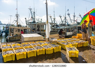 Sandakan, Sabah, Malaysia - May 27 2014: Catch of the night on display on the quay in front of Sandakan Fish Market
