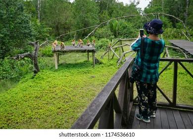 Sandakan Sabah Malaysia - Sep 4, 2018 : Tourist  at Labuk Bay Proboscis Monkey Sanctuary in Sandakan Sabah. Sandakan is well known for its nature and wildlife tourism.