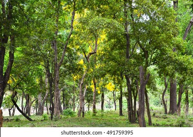 Sandalwood Forest Images, Stock Photos & Vectors | Shutterstock