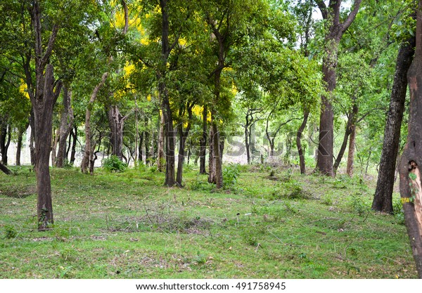 Sandalwood Forest Marayoor Near Munnar Kerala Stock Photo (Edit Now