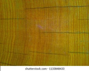 sandalwood trees fragrant in laos