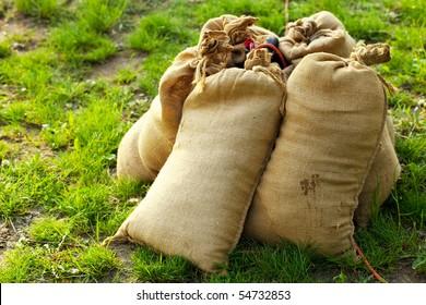 sandbags lying on green grass