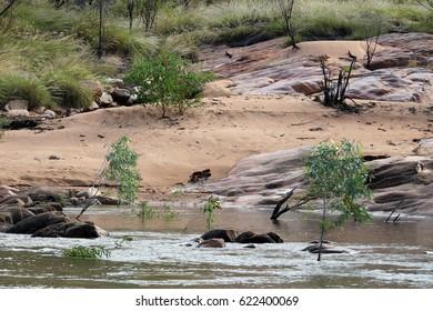 sandbanks with crocodile tracks in katherine, australia