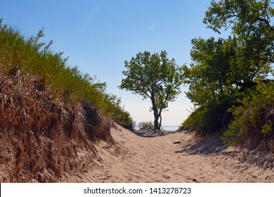 Sandbanks National Park dunes and trees on the beach, Ontario, Canada