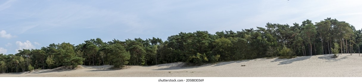 Sanddune ridge with pine tree forest on the edge part of the Soesterduinen sand dunes in The Netherlands on a sunny blue sky day