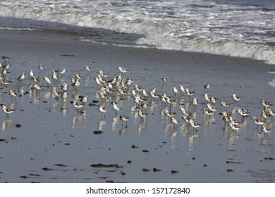 Wader Birds Images, Stock Photos & Vectors | Shutterstock