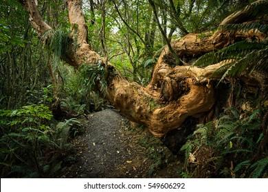 Sanders Falls Walk in Waimate, New Zealand