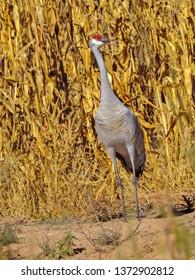 Imágenes, fotos de stock y vectores sobre Animal Refuge | Shutterstock
