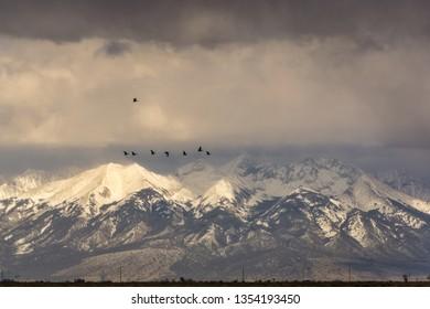 Sandhill Cranes migrating through Colorado's San Luis Valley.  Taken at Monte Vista National Wildlife Refuge.
