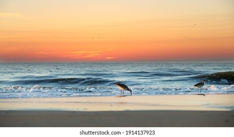 Sandpipers on the beach just before sunrise on Atlantic Coast