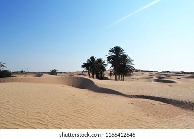Sands and palms of Sahara Desert