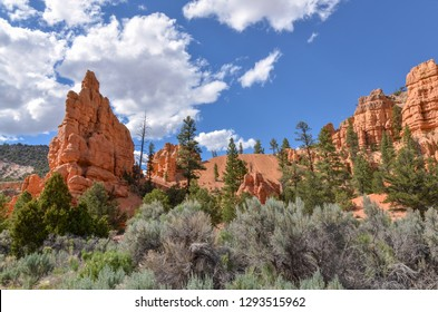 sandstone cliffs and hoodoos at Red Canyon in Dixie National Forest (Garfield County, Utah)