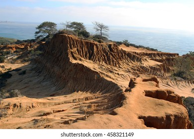Sandstone cliffs with the ocean in the background, Torrey Pines State Natural Reserve, San Diego, California, USA