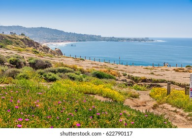 Sandstone cliffs at Torrey Pines gliderport are covered in wildflowers and offer stunning views of Scripps Pier and La Jolla