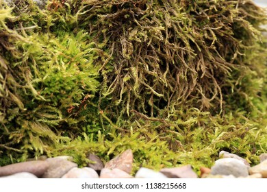 Sandstone covered with moss in the garden. Shady and damp alley. Macro photography.