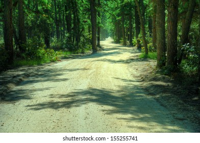 Sandy Back Road through forest