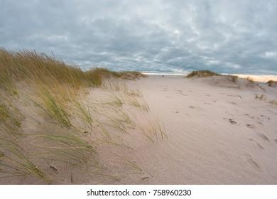 Sandy beach of the Baltic sea
