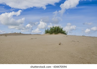 sandy beach and dune, lonely bush