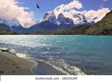 Sandy Beach Lake Pehoe in the national park Torres del Paine, Chile. The majestic cliffs of Los Kuernos. Above the lake fly birds of prey - the condor