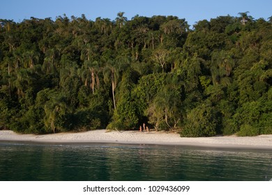 Sandy Beach Next to Rainforest in Front of Blue Sky