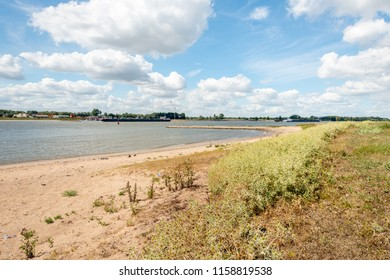 Sandy beach on the banks of the Dutch river Waal in the summer season. The water level is low because of the persistent drought period. In the foreground grows the Field Eryngo or Eryngium campestre.