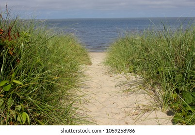 Sandy beach pathway through tall grass