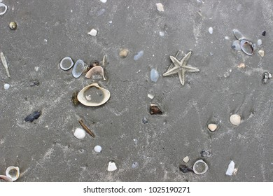 sandy beach with seashells crab and stars