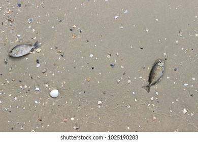 sandy beach with seashells crab and stars
