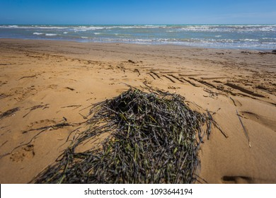 Sandy beach with seaweed, Bibione, Veneto, Italy