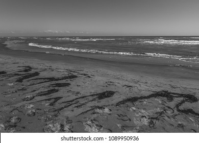 Sandy beach with seaweed carried by the backwash black and white effect, Bibione, Veneto, Italy