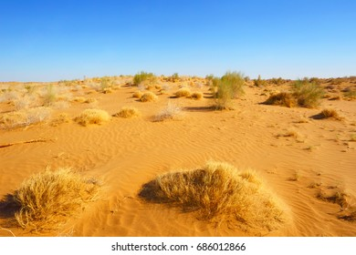 The sandy desert. Natural landscape.Central Asia.Uzbekistan.