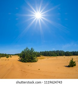 sandy desert with pine tree undera sparkle hot sun