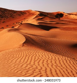 Sandy desert Wahiba in Oman, Near East, Arabia