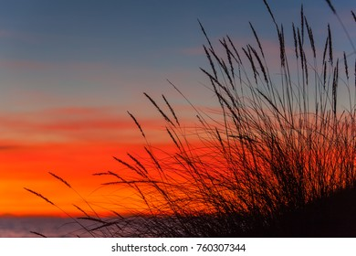 The sandy dune covered with a grass on bright sunset background in natural park Maremma in Tuscany, Italy