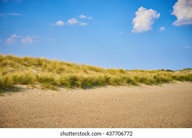 Sandy dunes with grass / Beach of Belgium near Nieuwpoort / pure nature