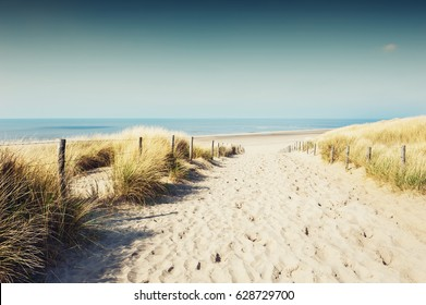 Sandy dunes on the sea coast in Noordwijk, Netherlands, Europe.