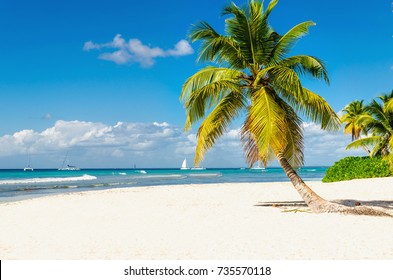Sandy exotic beach with high beautiful palm trees, Punta Cana, Dominican Republic, Caribbean Islands, Central America