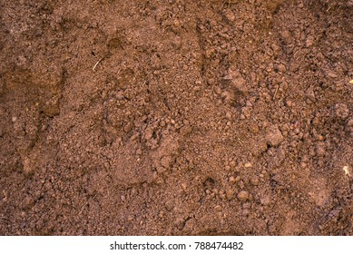 Sandy loam - soil background, texture
