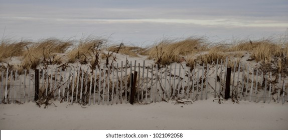 Sandy Neck Dunes, Cape Cod