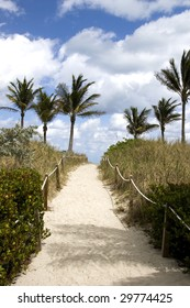 Sandy Path to the Beach with Palm Trees