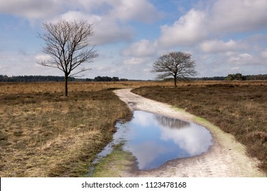 Sandy path with puddle in the North Brabant nature reserve the Regte Heide near Goirle