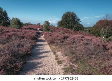 Camino arenoso a través de las correas en el Parque Nacional Veluwe durante la puesta de sol en los Países Bajos