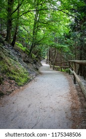 Sandy path with wooden fence in forest