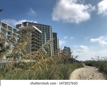 Sandy pathway with abundance of sea oats in Myrtle Beach South Carolina on an August morning.