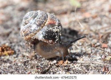 sandy snail crawl on forest path