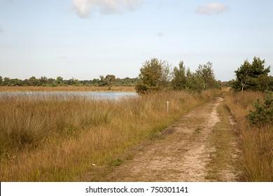 Sandy track and mere in heathland reserve Kampina, North Brabant, Netherlands