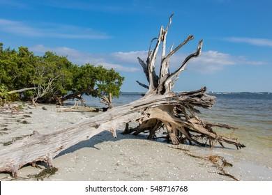 Sanibel Island Driftwood