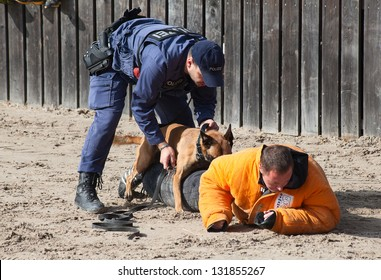 "SANKT GALLEN, SWITZERLAND - OCTOBER 22: Police demonstrates dog training on the agricultural show ""Olma"" on October 22, 2011 in Sankt Gallen, Switzerland"